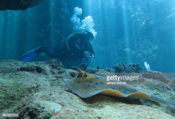 Taucherin, Blaupunktrochen , St. Johns Riff, Rotes Meer, Aegypten