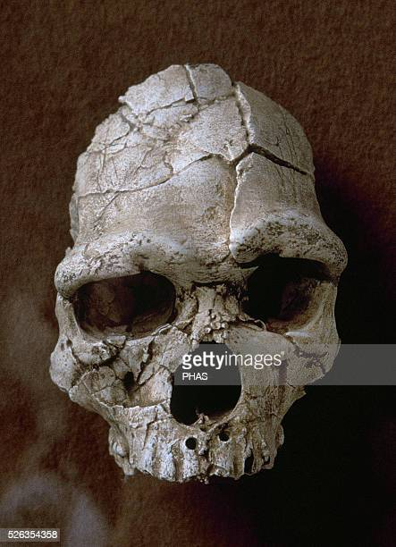 Tautavel Man Subspecies of the hominid Homo erectus 450000 years old fossil Discovered in the Arago Cave in Tautavel France