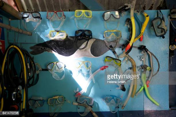 taveuni dive shop - helena price stock pictures, royalty-free photos & images