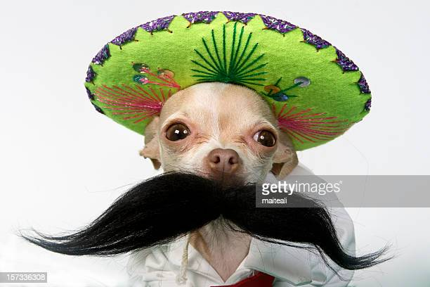 charro - mexican hat stock pictures, royalty-free photos & images