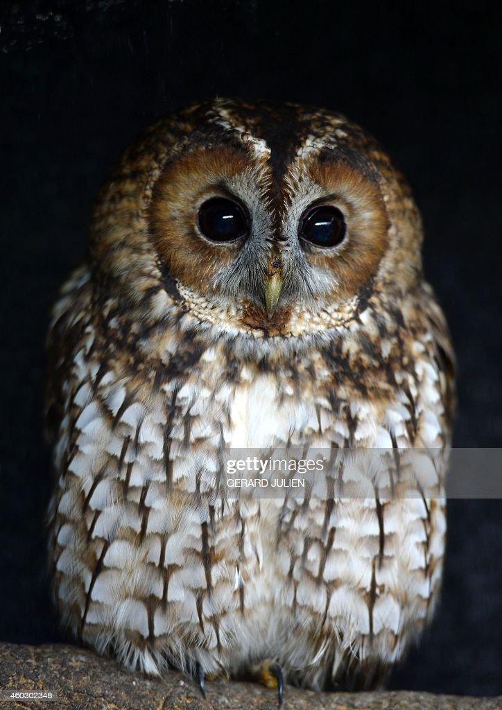 SPAIN-ANIMAL-MEDECINE : News Photo