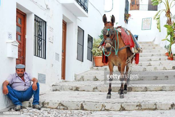 taxi donkey having a break in costal del sol - donkey stock pictures, royalty-free photos & images