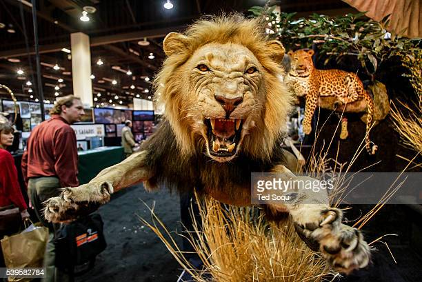 Taxidermied animals The Safari Hunters Club convention 2004 held in Reno Nevada The annual event features the latest in hunting including guns guides...