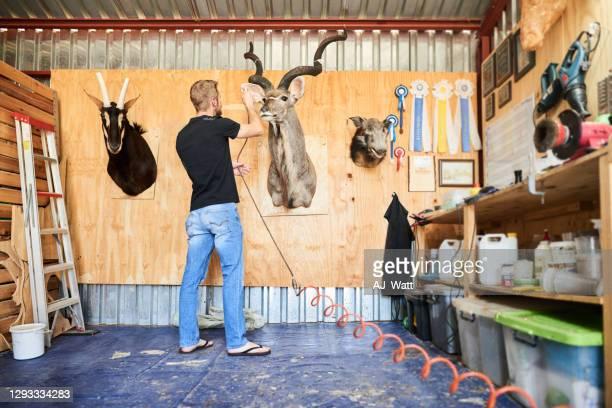 taxidermist using an airbursh on a mounted buck head in his workshop - palanca negra imagens e fotografias de stock