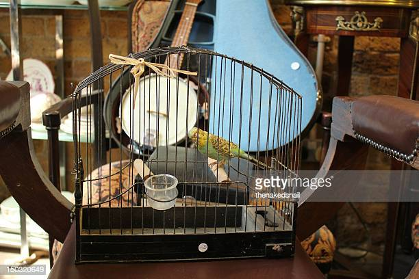 Taxidermy bird in cage