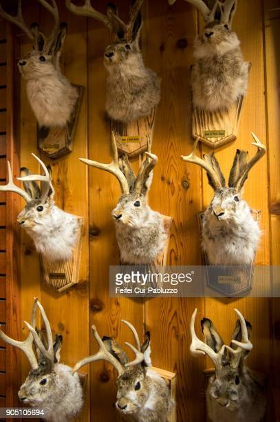 Taxidermy of rabbit head with horn of reindeer at Wall, South Dakota, USA