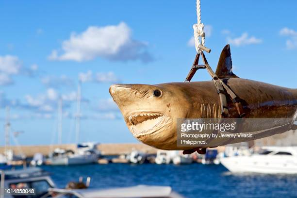 taxidermy shark - hanging death photos stock pictures, royalty-free photos & images
