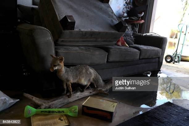 A taxidermy sits on the garage of a flood damaged home on September 7 2017 in Richwood Texas Over a week after Hurricane Harvey hit Southern Texas...