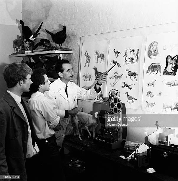 Taxidermy students receive tuition in animal anatomy from instructor Arthur Haywood in a basement at the Natural History Museum in London England ca...