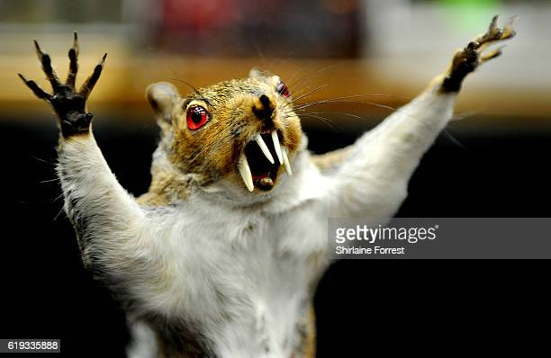 Taxidermy ware squirrel for sale during Manchester International Tattoo Show at Manchester Central on October 30 2016 in Manchester England