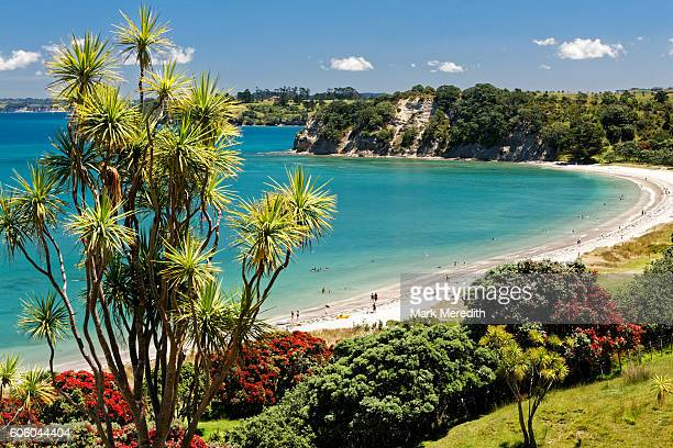 Te Haruhi Bay at Shakespear Regional Park with cabbage tree and blooming pohutukawas, New Zealand's Christmas Tree