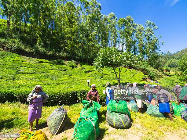tea country - grounds stock pictures, royalty-free photos & images