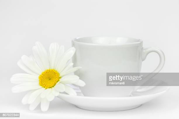 Tea cup with ox-eye daisy flower on white background