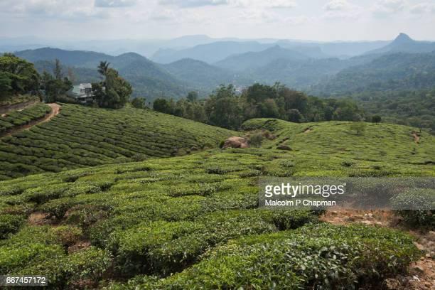 Tea estate and plantations with beautiful scenery, Munnar, Kerala, India