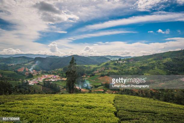 Tea Estates in the Nilgiri Ranges
