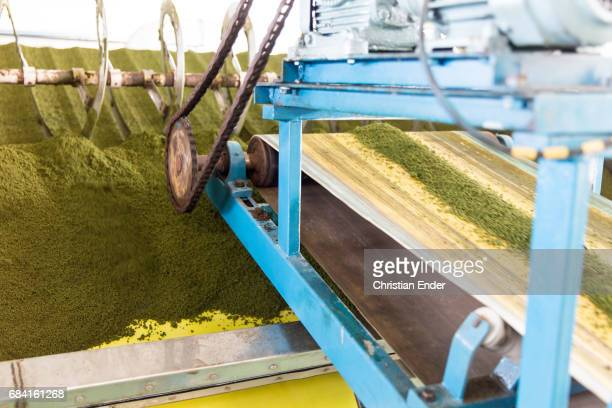 tea factory in darjeeling - west bengal stock pictures, royalty-free photos & images