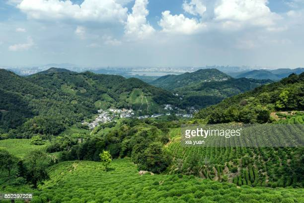tea fields landscape with village,hangzhou,china - zhejiang province stock pictures, royalty-free photos & images