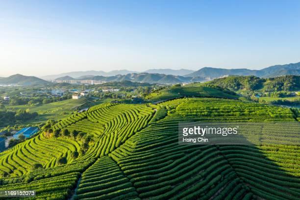 tea garden - zhejiang provincie stockfoto's en -beelden