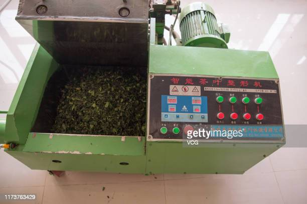 Tea leaves are seen in a leaveshaping machine on September 7 2019 in Zhanjiang Guangdong Province of China