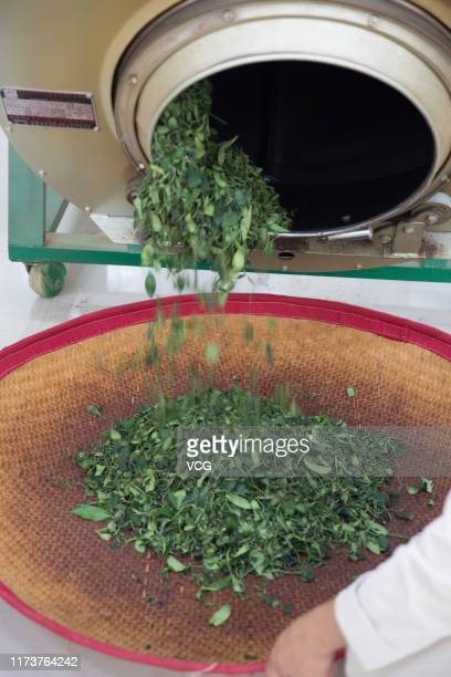 Tea leaves fall from a machine on September 7 2019 in Zhanjiang Guangdong Province of China