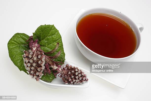 Tea made of the medicinal plant Butterbur Petasites hybridus