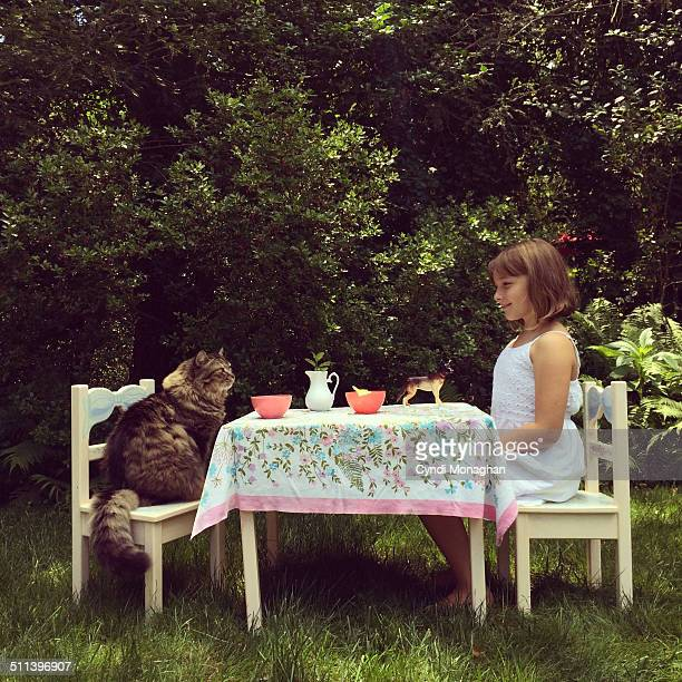 tea party with a maine coon cat - feline stock pictures, royalty-free photos & images