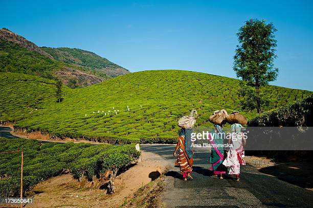 Tea pickers from Munnar