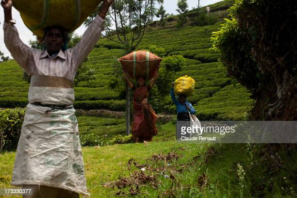 Tea pickers going back with their bags of about 35kg on their head to the Tea factory before taking their lunch break.