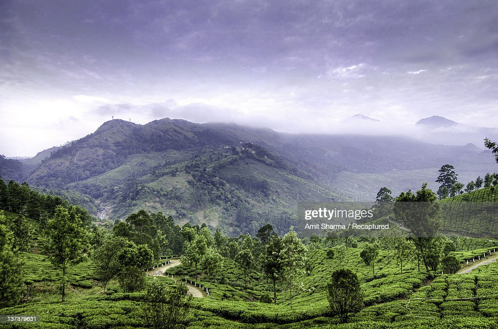 Tea plantation and hills at Munnar : Stock Photo