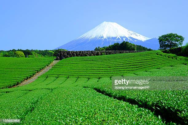 tea plantation and mt. fuji - shizuoka stock photos and pictures