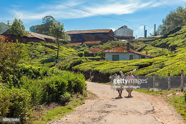 tea plantation and processing facility in kerala, india - village stock pictures, royalty-free photos & images