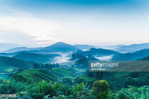 tea plantation, cameron highlands, malaysia - malaysia stock pictures, royalty-free photos & images