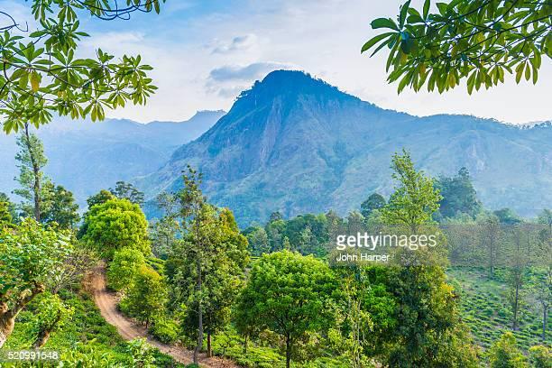 tea plantation, ella, sri lanka - sri lanka stock pictures, royalty-free photos & images