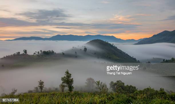 tea plantation in mist - bao loc, vietnam - valley stock pictures, royalty-free photos & images