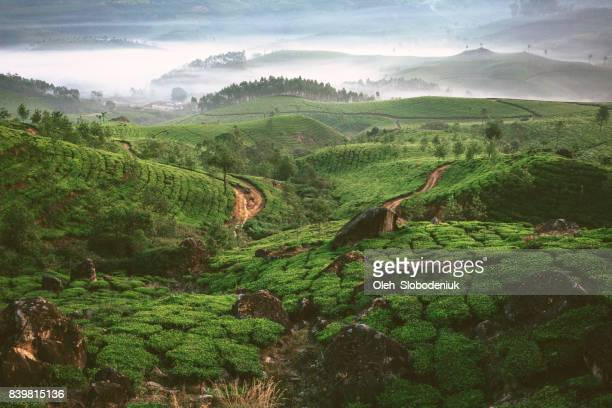 tea plantation in munnar, kerala - india stock pictures, royalty-free photos & images