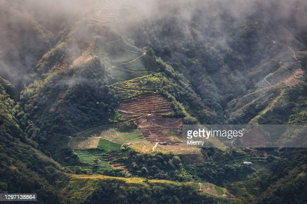 tea plantation taiwan nantou highlands mountain terraced field - mlenny stock pictures, royalty-free photos & images