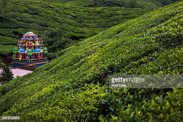 Tea plantations and a tiny Hindu temple in the greenery in the Nilgiri mountains range near Ooty and Coonoor hill stations in Tamil Nadu