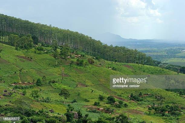tea plantations and hills, mozambique - mozambique stock pictures, royalty-free photos & images