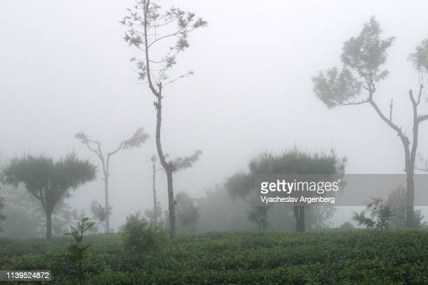 tea plantations and rainforest, sri lanka - argenberg fotografías e imágenes de stock