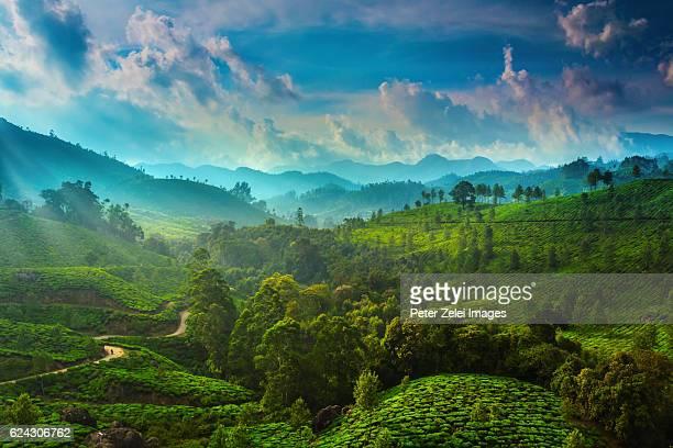 tea plantations in the surroundings of munnar, kerala, india - paisajes de india fotografías e imágenes de stock