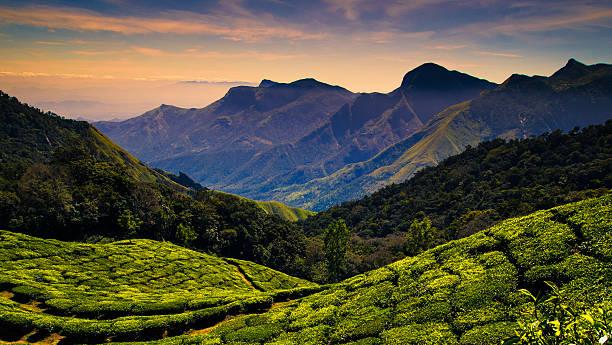 Tea plantations near Kodaikanal