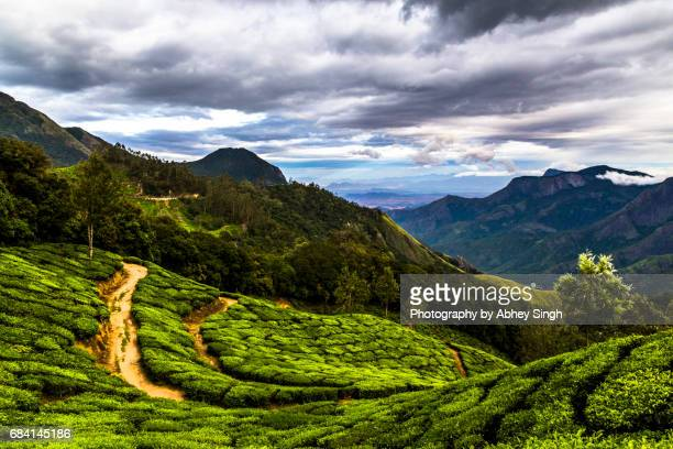 Tea plantations on hills with clouds in Munnar, Kerala, India