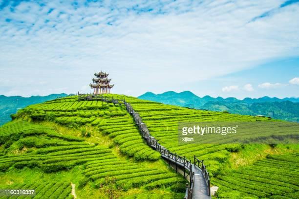 tea plantations - china imagens e fotografias de stock
