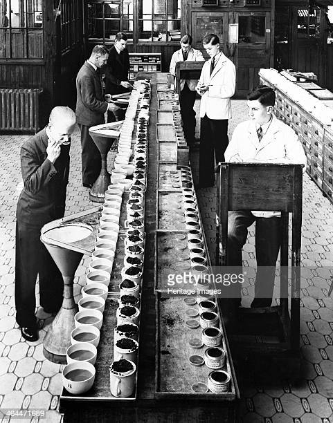 Tea tasters at Lyons tea factory Greenford Greater London post 1920 The tasters on the left work their way down a long line of cups of tea with a mug...