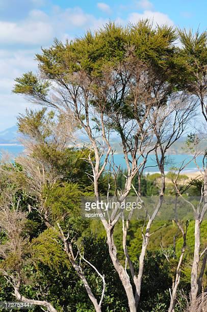 Tee-Baum-Neuseeland