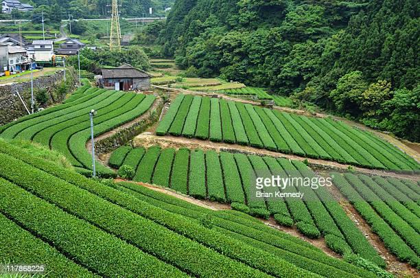 tea valley - 佐賀県 ストックフォトと画像