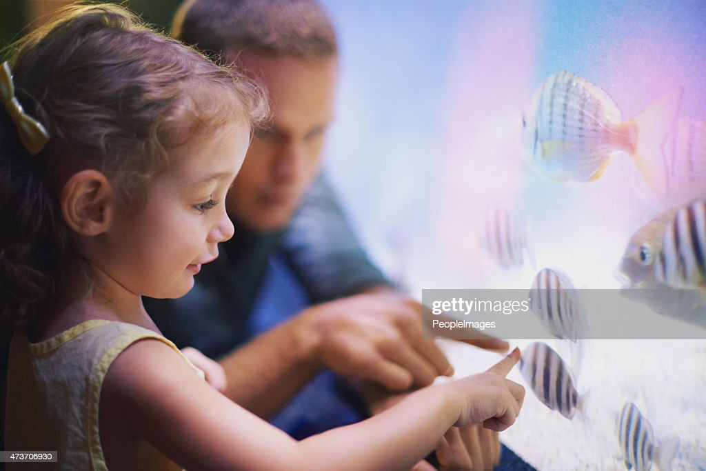 Teach your child to love and respect animals : Stock Photo