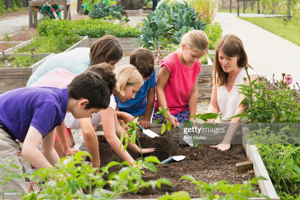 Teacher and students gardening in raised bed : Stock-Foto