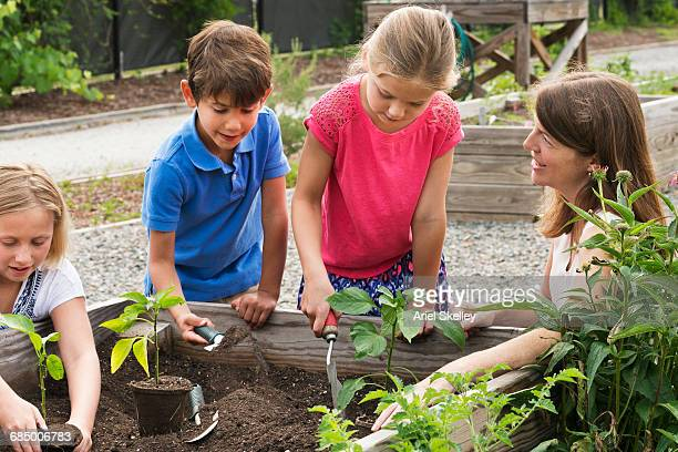 Teacher and students gardening in raised bed