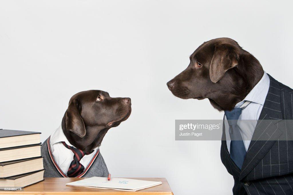 Teacher dog and student dog : Stock Photo